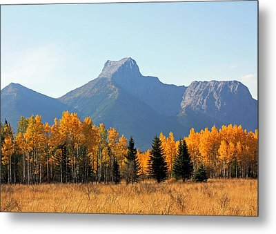 Wedge Mountain And Aspen Metal Print by Gerry Bates