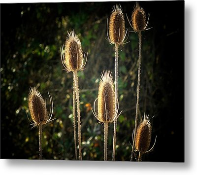 Weeds Metal Print by Michael L Kimble