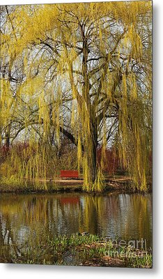 Weeping Willow  Metal Print by Isabel Poulin