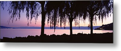 Weeping Willows, Lake Geneva, St Metal Print by Panoramic Images
