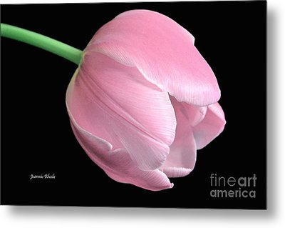 Welcome Spring In Pink Metal Print