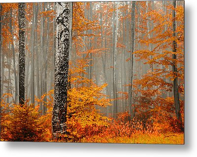 Welcome To Orange Forest Metal Print by Evgeni Dinev