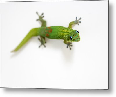 Well Hello There Metal Print by Denise Bird
