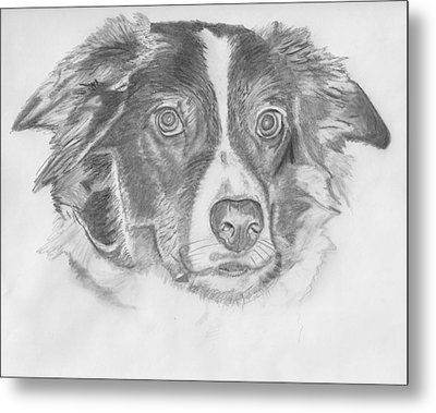 Welsh Border Collie Metal Print by Catherine Roberts