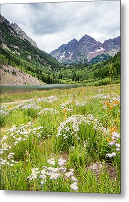 West Elk Wildflowers Metal Print