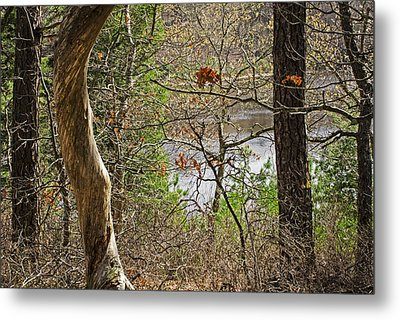 West Pond In The Woods Metal Print by Frank Winters