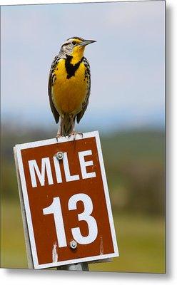 Western Meadowlark On The Mile 13 Sign Metal Print by Karon Melillo DeVega