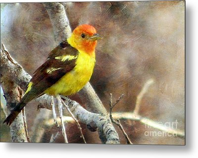 Western Tanager Metal Print by Irina Hays