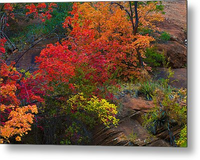 Metal Print featuring the photograph Westfork's Colors by Tom Kelly