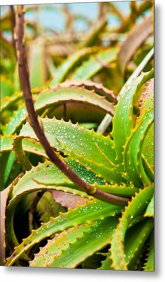 After The Rain Metal Print by Melinda Ledsome