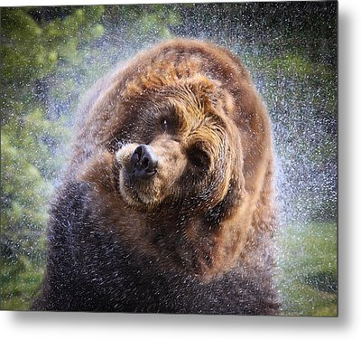 Metal Print featuring the photograph Wet Griz by Steve McKinzie