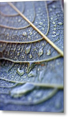 Wet Leaf Metal Print by Frank Tschakert