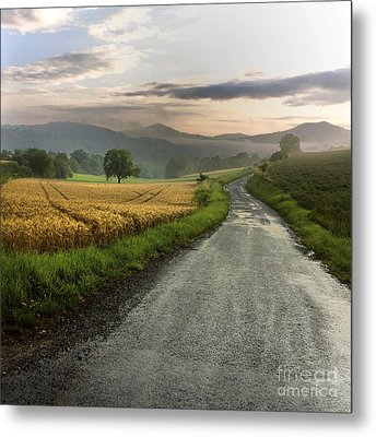 Wet Road Through Fields Of Wheat. Auvergne. France. Metal Print