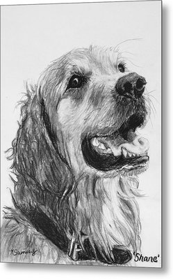 Wet Smiling Golden Retriever Shane Metal Print