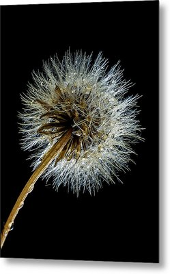 Wet Weed Metal Print by Jean Noren