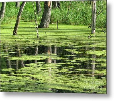Wetland Reflection Metal Print by Ann Horn
