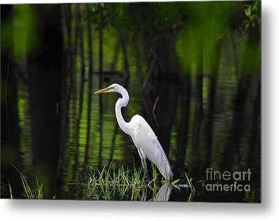 Wetland Wader Metal Print by Al Powell Photography USA