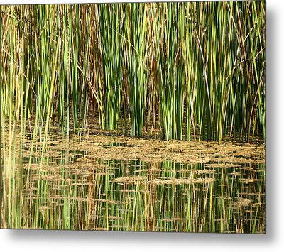 Metal Print featuring the photograph Wetlands by Laurel Powell