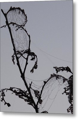 Wetting The Spiderweb. Metal Print