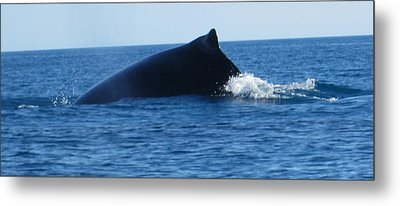 Metal Print featuring the photograph Whale by Tony Mathews