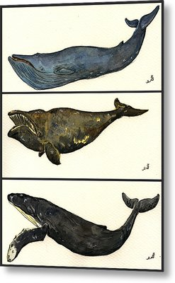 Whales Compilation 1 Metal Print by Juan  Bosco