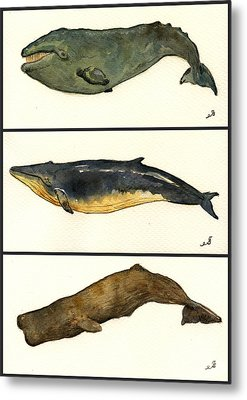 Whales Compilation 2 Metal Print by Juan  Bosco