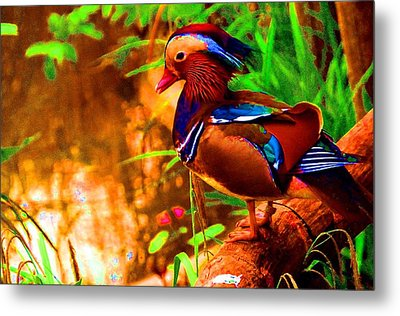 What A Strange Duck You Are, May I Take Your Picture   Metal Print
