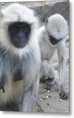 What Are You Looking At? Metal Print