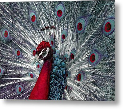 What If - A Fanciful Peacock Metal Print