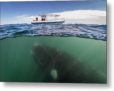 What Lies Beneath Metal Print by Justin Hofman