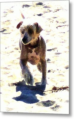 What Shall We Call Him? Metal Print by Brian D Meredith