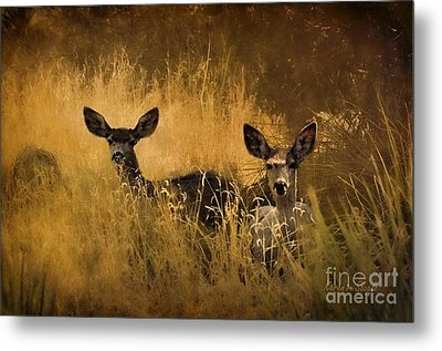 Metal Print featuring the photograph What'cha Lookin' At by Karen Slagle