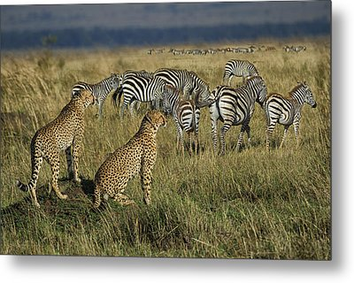 What's On The Menu? Metal Print by Wade Aiken