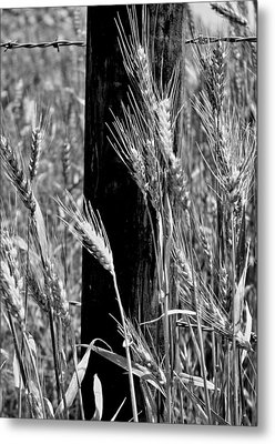 Metal Print featuring the photograph Wheat And Fence Post by Ellen Tully