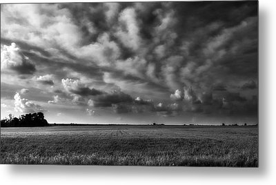 Wheat Black And White Metal Print by Eric Benjamin