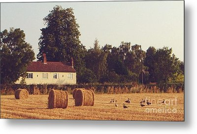 Wheat Field And Geese At Harvest Metal Print