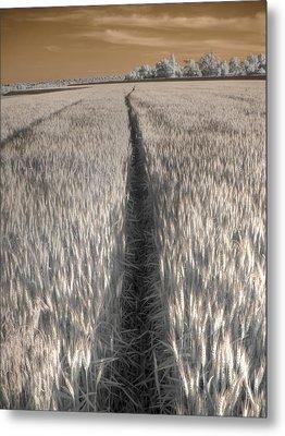 Wheat Field Metal Print by Jane Linders