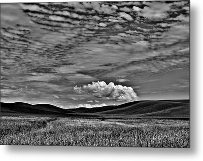 Wheat Fields In The Palouse Metal Print by David Patterson