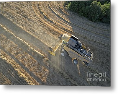 Wheat Harvest In Provence Metal Print by Sami Sarkis