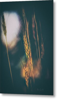 Wheat Of The Evening Metal Print