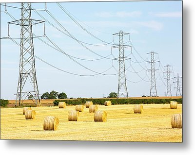 Wheat Stubble In A Field Metal Print