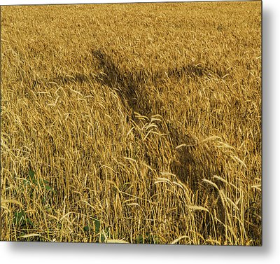 Wheat With Cross  Metal Print by Rob Graham