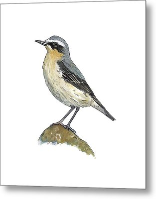 Wheatear, Artwork Metal Print by Science Photo Library