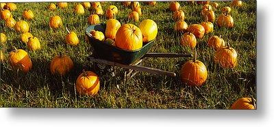 Wheelbarrow In Pumpkin Patch, Half Moon Metal Print by Panoramic Images