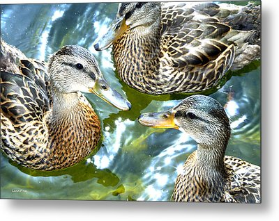 When Duck Bills Meet Metal Print