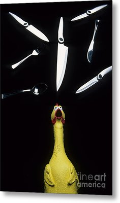 When Rubber Chickens Juggle Metal Print