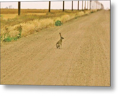 Metal Print featuring the photograph Where Is Everyone? by Shirley Heier