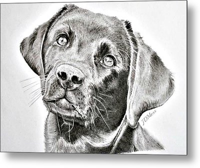 Where Is My Bone Metal Print by Janet Moss