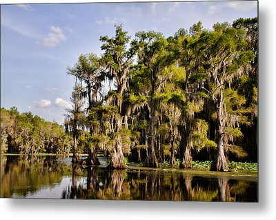 Metal Print featuring the photograph Where The Cypress Grows by Lana Trussell