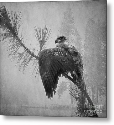 Where The Eagle Flys  Metal Print by Beve Brown-Clark Photography